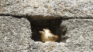 Ahora la gallina se busca durante todo el año
